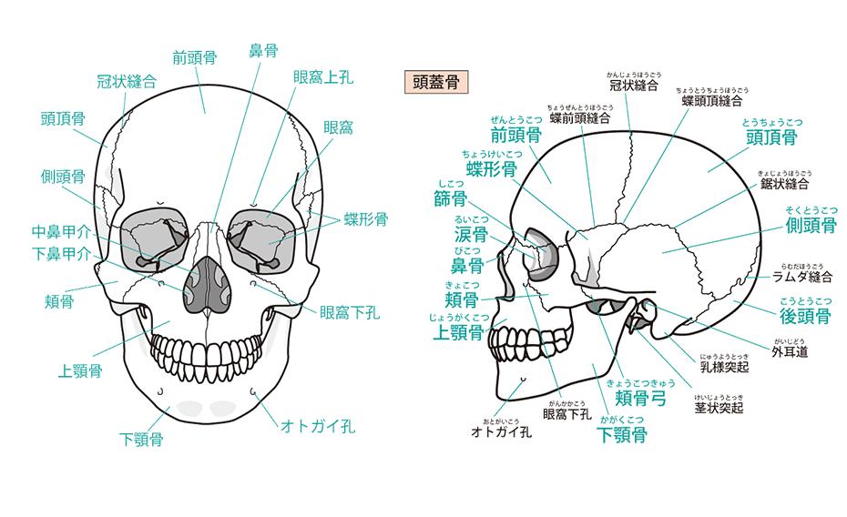 sango40 - 料金・メニュー
